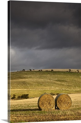 Hay Bales In A Field Under A Dark Cloudy Sky; Northumberland, England