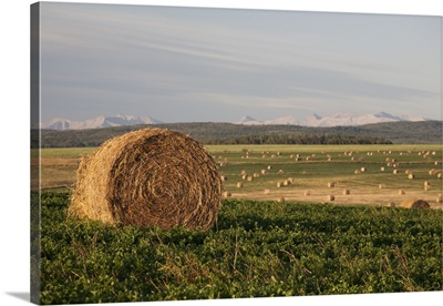 Hay Bales In A Field With Mountains In The Background At Sunrise; Alberta, Canada
