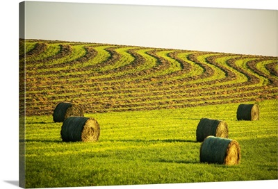Hay Bales In A Green Field, West Of Calgary, Alberta, Canada