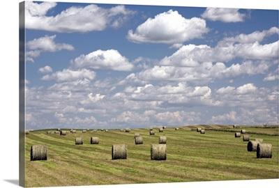 Hay Bales In Field, Alberta, Canada