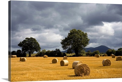 Hay Bales In Field, Clogheen, County Tipperary, Ireland