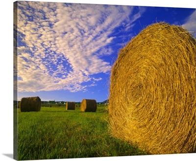 Hay Bales In Field, Quebec, Canada