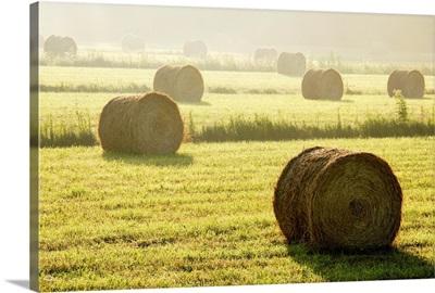 Hay Bales In Mist At Sunrise, Bas-Saint-Laurent Region, Quebec, Canada