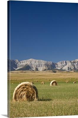 Hay Bales, Southern Alberta, Canada