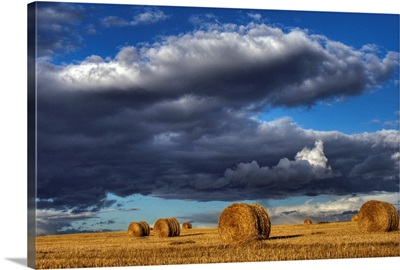 Hay Bales Under Cumulus Clouds In Autumn, Rural Alberta, Canada