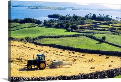 Hay Making, Lough Corrib, Co Galway, Ireland