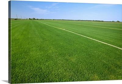 Healthy crop of grass sod at a commercial sod farm, San Joaquin Valley, California