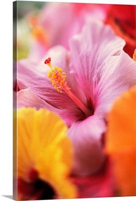 Hibiscus Flower Arrangement With Soft Focus, Close-Up Detail