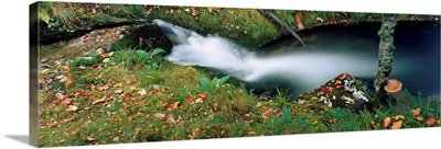 High Angle View Of A River In A Forest, Republic Of Ireland