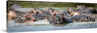 Hippopotamus Pod, Serengeti National Park, Tanzania