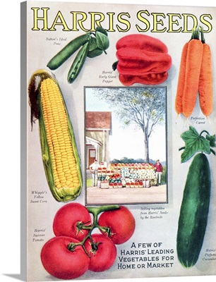 Historic Harris seeds catalog with illustration of vegetables from 20th century