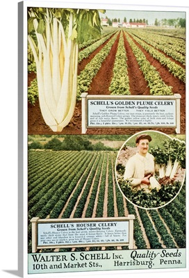 Historic Walter S. Schell seed catalog from 20th century