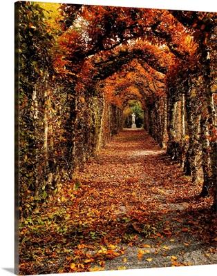 Hornbeam Alles, Birr Castle, County Offaly, Ireland