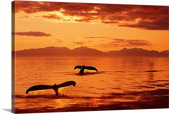 Humpback Whale Tails at Sunset SE Digital Composite Photo