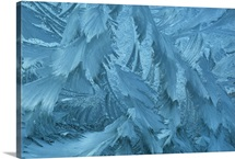 Ice patterns formed on glass after a hard frost, Nelson, Wakefield, New Zealand
