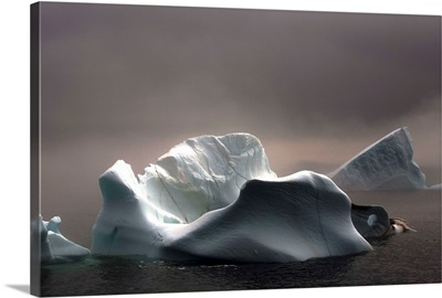 Icebergs In Fog, Quirpon Island, Newfoundland