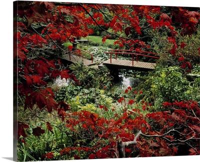 Japanese Garden, Through Acer In Autumn, Powerscourt Gardens, Co Wicklow, Ireland