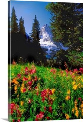 Jerry Kobalenko; Mt.Assiniboine Landscape With Alpine Wildflowers, Canada