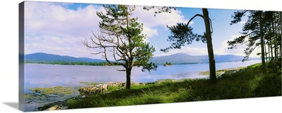 Kenmare Bay, Dunkerron Islands, Co Kerry, Ireland, Shoreline On A Bay