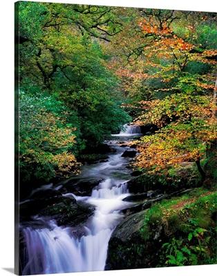 Killarney National Park, Ring Of Kerry, County Kerry, Ireland