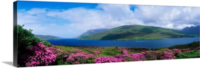 Killary Harbour With Wildflowers, County Galway, Ireland