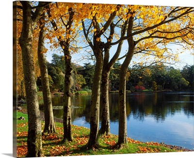 Lake And Trees, Mount Stewart, County Down, Ireland