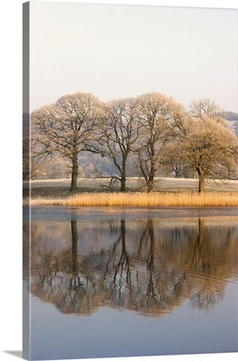 Lake Scenic With Autumn Trees Reflected In Water, Cumbria, England