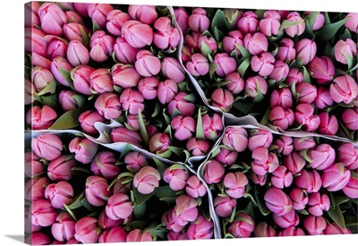 Large Bunches Of Tulips For Sale In The Flower Marketamsterdam, Holland