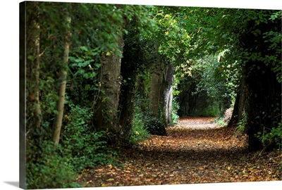 Leaf covered pathway in dense forest, Cahir, County Tipperary, Ireland