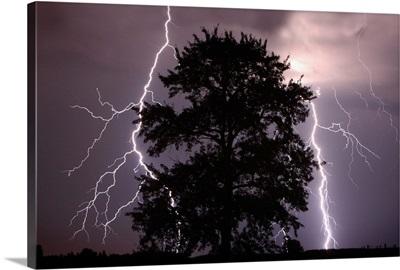Lightning Strikes In The Sky Behind A Tree; Alberta, Canada