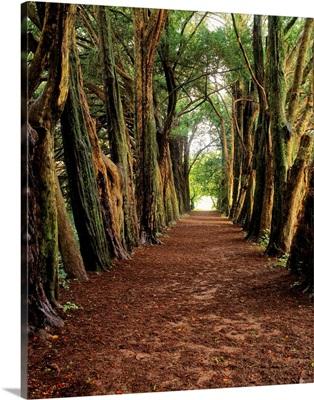 Lismore, County Waterford, Ireland, Castle's Pleasure Ground