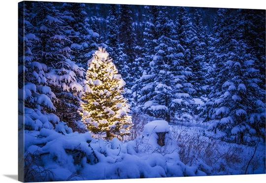 lit christmas tree in snow covered forest of spruce trees - Snow Covered Christmas Trees