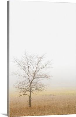Lone Tree In A Wheat Field