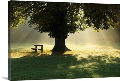 Lone Tree In Mist And Sunlight; Cahir, County Tipperary, Ireland