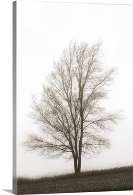 Lone Tree In The Mist