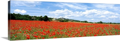 Looking Across Field Of Poppies To Small Village In Provence