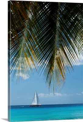 Looking Through Palm Trees To Large Yacht Off The West Coast Of Barbados