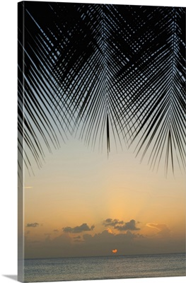 Looking Through Palm Trees To Sunset On The West Coast Of Barbados