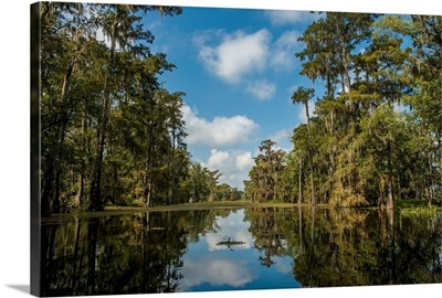 Louisiana, Swamp landscape, Breaux Bridge