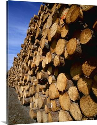 Lumber industry, cut logs at a lumber mill, Alaska