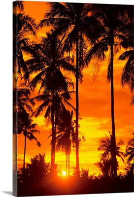 Many Palms Silhouetted In Vibrant Orange Sunset Sky