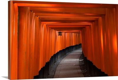 Many tori gates at Fushimi Inari, Kyoto, Japan
