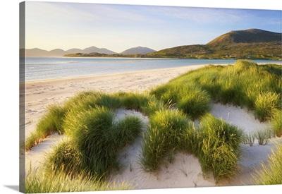 Marram Grass And Dunes, Sound Of Taransay, Isle Of Harris, Scotland