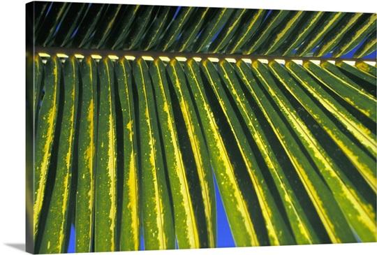 Mexico, Riviera Maya, Chankanaab Nature Park; Cozumel, Palm leaf ...