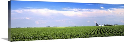 Mid growth soybean field with farmsteads in the distance