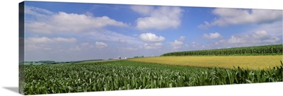 Mixed fields of mid growth grain corn, soybeans and maturing oats with farmsteads