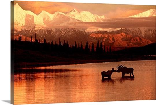Moose Kissing in Wonder Lake Denali NP Digital Composite