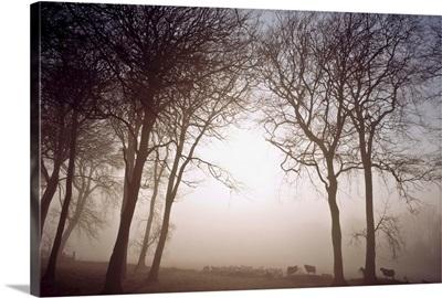 Morning Mist, County Wicklow, Ireland