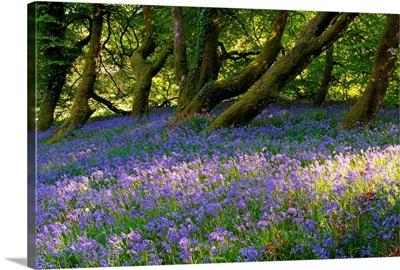 Mount Congreve Gardens; County Waterford, Ireland