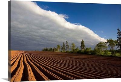 Newly Planted Potato Field, Prince Edward Island, Canada